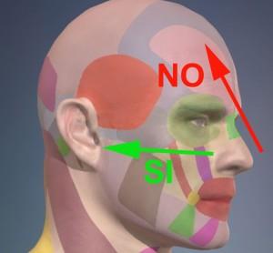 fig. 1_direzione corretta (in verde) del flusso aereo attraverso il naso