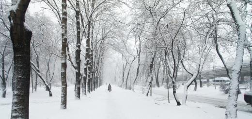 bosco-neve