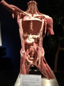 anatomia-in-mano-3