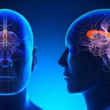 cervello-testa