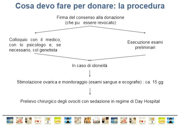 procedura-donazione-ovociti-sismer