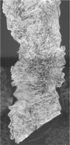 papiri-ercolano-cnr-1