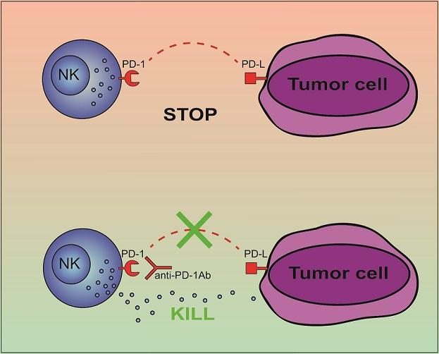 infografica-cellule-tumorali-bambino-gesu