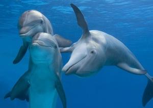 delfini-nico-1