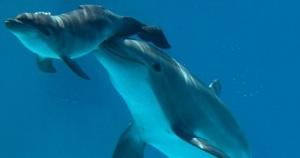 delfini-nico-2