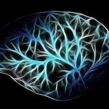 cervello-mappatura