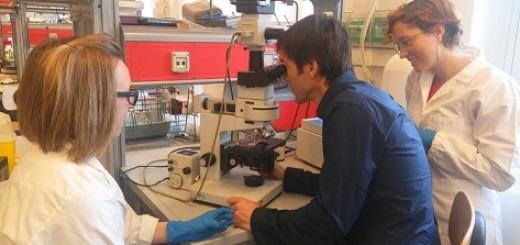 barmasse-microscopio-nico-torino