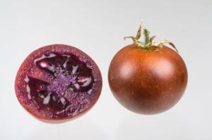 pomodoro-bronzeo-cnr