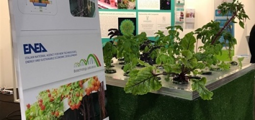 seed-chips-2017-stand-enea
