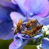 api-fiori-blu