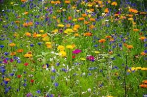 fiori-primavera