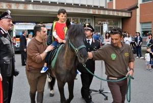 cavalli-forestale-pediatria-aou-senese