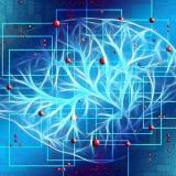 cervello-connessioni