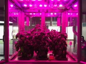 simulatore-per-coltivare-piante-al-chiuso-nello-spazio-enea