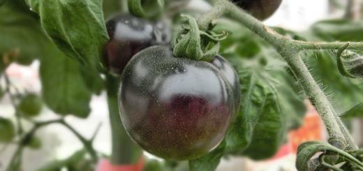 pomodoro-nero
