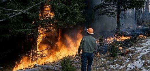 incendio-bosco