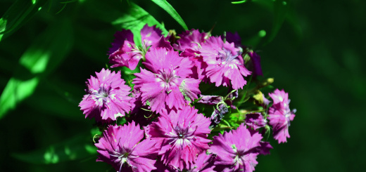 pianta-fiori