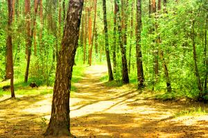 alberi-bosco-2