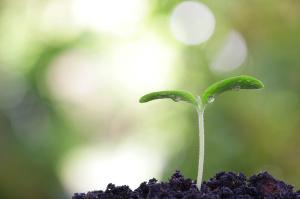 germoglio-terra-ambiente