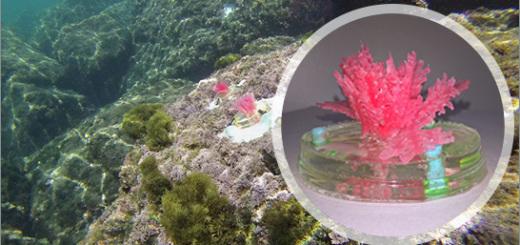 enea-alghe-artificiali