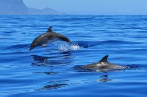 delfini-cetacei-mare