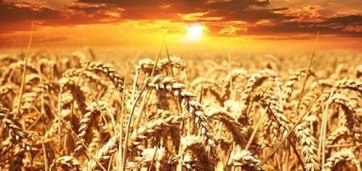 campo-di-grano