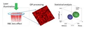 effetto-lente-globuli-rossi-cnr