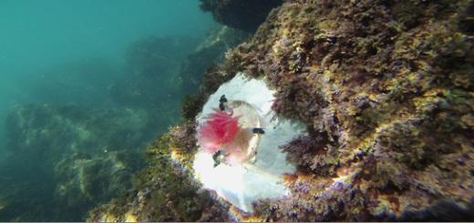 alghe-sosia-enea