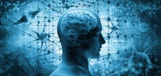 cervello-e-legami-sin