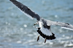 mare-uccelli-marini