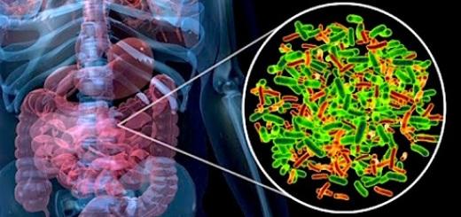 microbiota-intestino