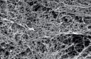 xpress-tessuto-tridimensionale-creato-in-laboratorio