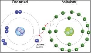 free-radical-e-antioxidant