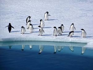 antartide-censimento-pinguini-enea