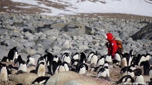 antartide-penguinera