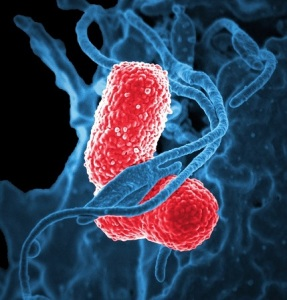 klebsiella-pneumoniae