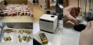misurazioni-magnetiche-foglie-e-roccia-ingv