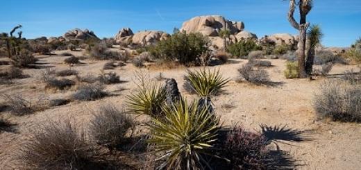 area-desertica-parco-nazionale-joshua-tree