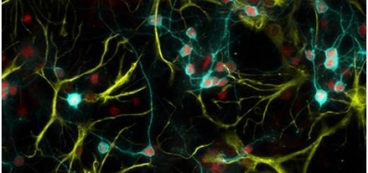 neuroni-e-astrociti-san-raffaele