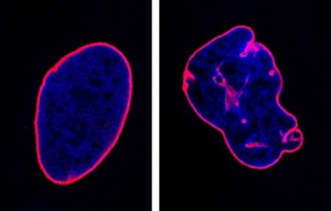 nuclei-confocale-opbg