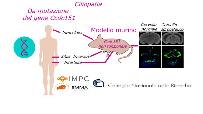 ciliopatia-cnr