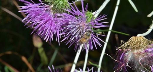 pollination-scuola-sant-anna-pisa