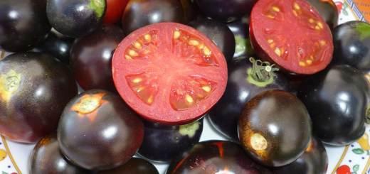 pomodoro-fonte-plantlab-santanna-pisa